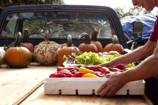 Small, organic farmer loads up his truck for the Farmers' Market