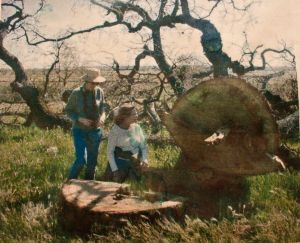 Developer Meghdadi cut down over 100 healthy heritage Valley Oaks,3/29/02. Photo by Tim Bosquet