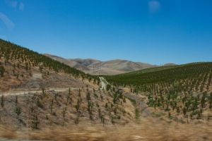 "San Joaquin Valley ""almond orchard"""