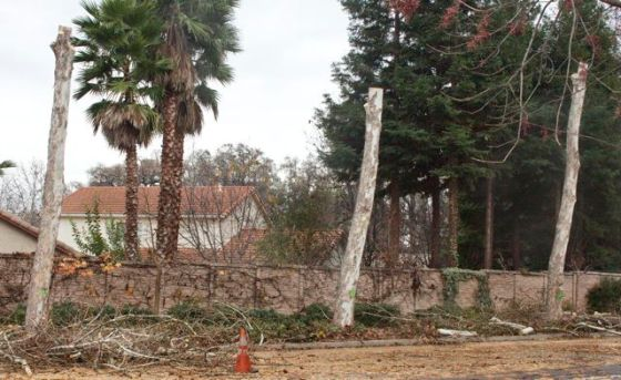 South-facing, now these neighbors will have blazing hot backyards. Palms drop big branches too.
