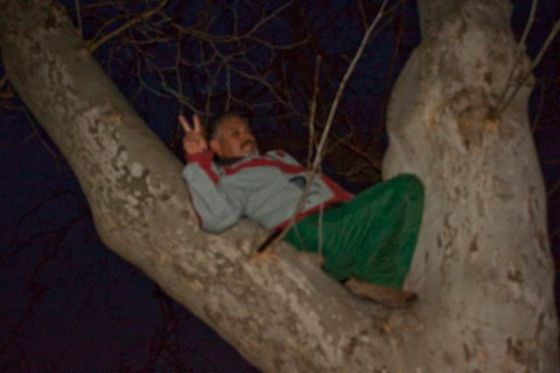 Dave climbs up into a tree again.