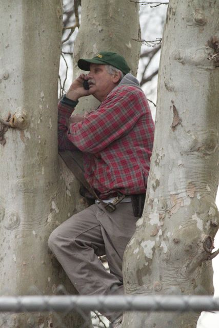 Al talks to his wife while from up in one of the trees.
