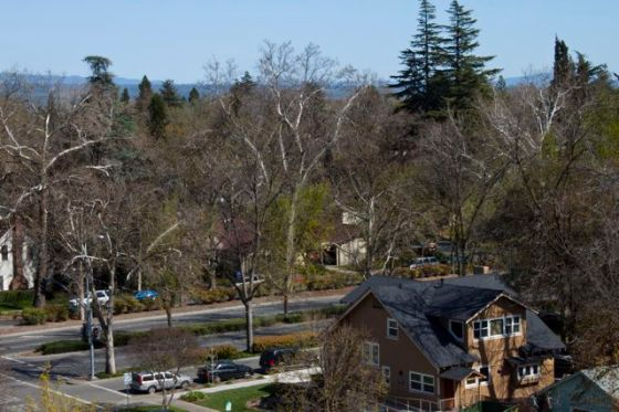 Chico Avenues neighborhood as seen from on top of Enloe building