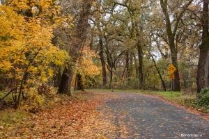 Bidwell Park