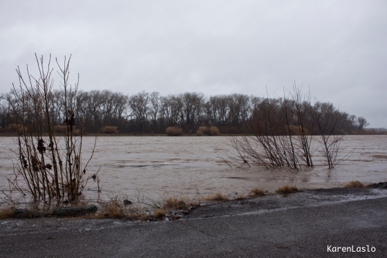 Sacramento River as seen from River Rd. Note there isn't any bank visible.